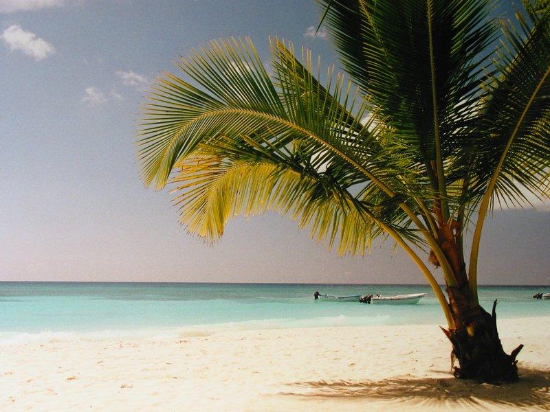 plage de l\'ile de saona dans le sud de la république dominicaine. Le paradis sur terre pour celle et celui qui est prêt à marcher un peu pour trouver un peu de tranquillité. Une fois sur place, n\'hési